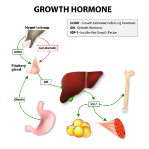 How to Increase Growth Hormone Naturally: 15 Tactics – Above